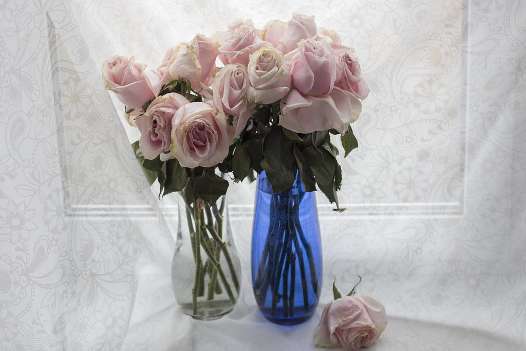 Постденьрожденческие розы_1