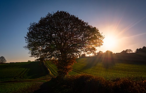 scenicsnotjustlandscapes landscpes tokina1120mmatx tokina ultrawide wideangle tree sunset ngc colours