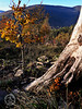 Jesien na Kozia Góra