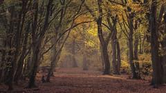 Golden Path  (由  willblakeymilner