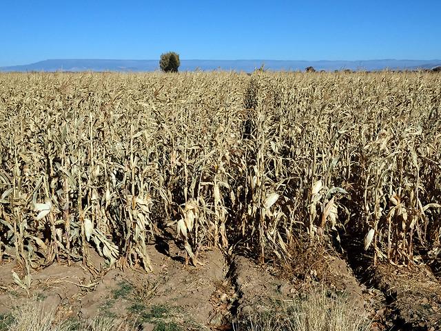 Crop Yielding