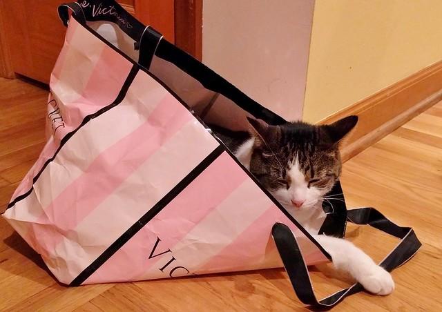 Mercutio in a Bag