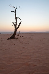 Namib Desert Snag