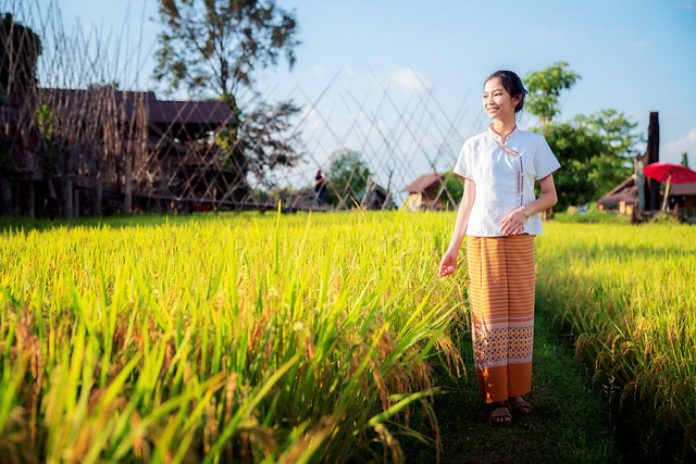 Thai girl walk on paddy and rice farm in lamduan woven cloth coffee shop