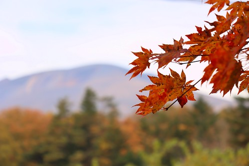 Autumn at Shinshu Japan, 2019