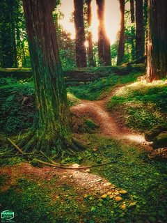 REDWOODS LIT TRAIL-08-31-2019-3024WX4032H-300PPI- © Cody Jacobson-ZEN MOUNTAIN MEDIA all rights reserved