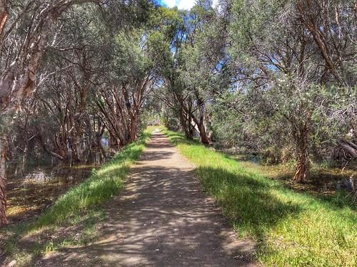 yellagonga regional park joondalup perth west western australia path landscape trees bomen landschap nature iphone6 paperbark