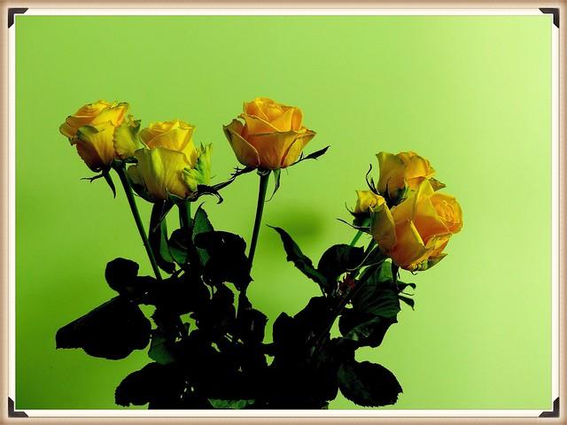 Bukiet żółtych róż.