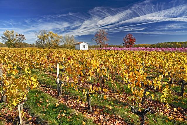 Ciel et vignes d'automne