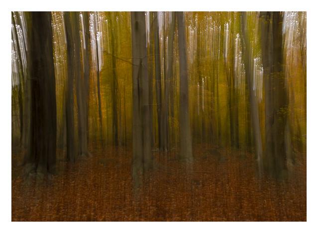 Autumn is my favourite season.........