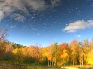 Autumn forecast