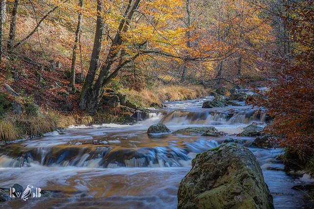 Autumn river and forest - La Hoegne, Belgium