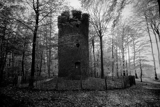 The tower in the forest