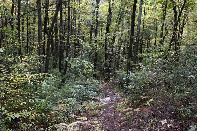 New England jungle paths