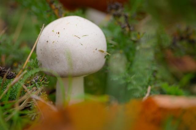 Little balloon in the moss