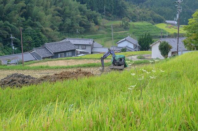 明日香村・細川1・Rice Field of Asuka