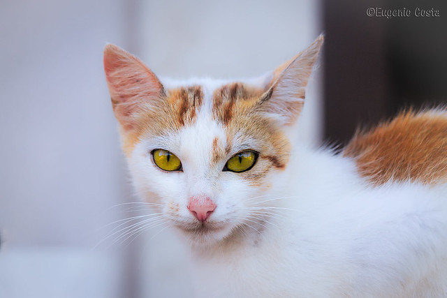 il gatto è poesia - the cat is poetry
