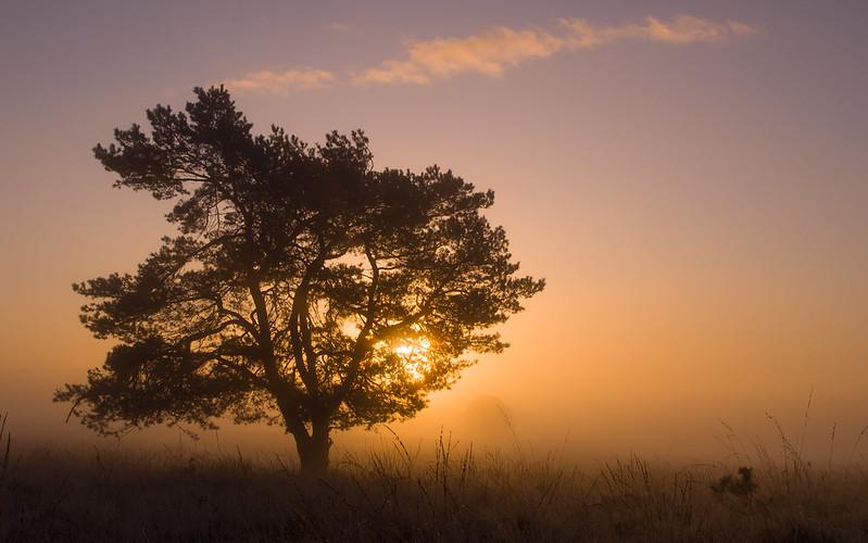a very quiet sunrise