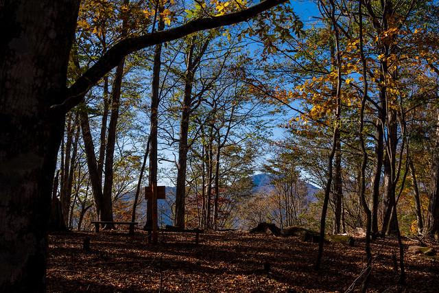 樹林に囲まれた大マテイ山へ