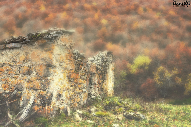 Otoño en ruinas - Ruined autumn