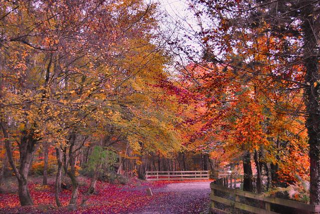 Forêt de Villecartier.