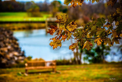 fall gold leaf lake seat bench park time moment meaning sense spot core stop view personal direct life autumn november warm tranquility calm serenity peace grace
