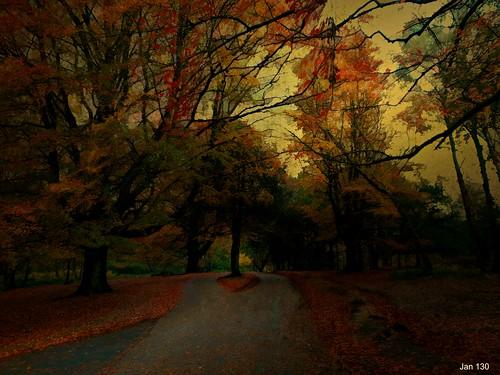 jan130 digitalpainting beechtrees beechwood autumn fall november2019 texture topaz artwork dark atmospheric beautiful