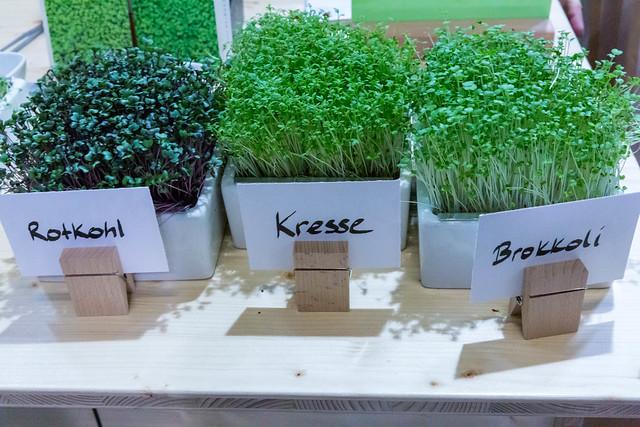 Heimgart Kresse, Rotkohl und Brokkoli Microgreens