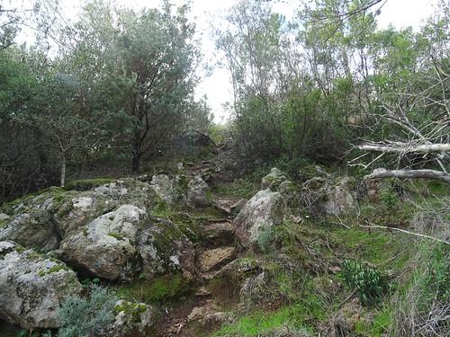 Le sentier d'arrivée au Cavu