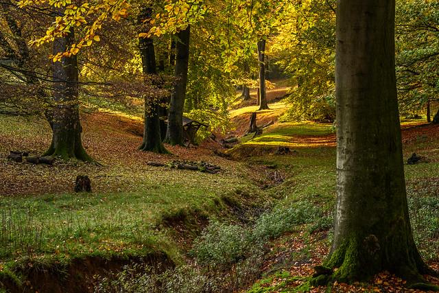 Autumn Evening Light / Herbstabendlicht (2)