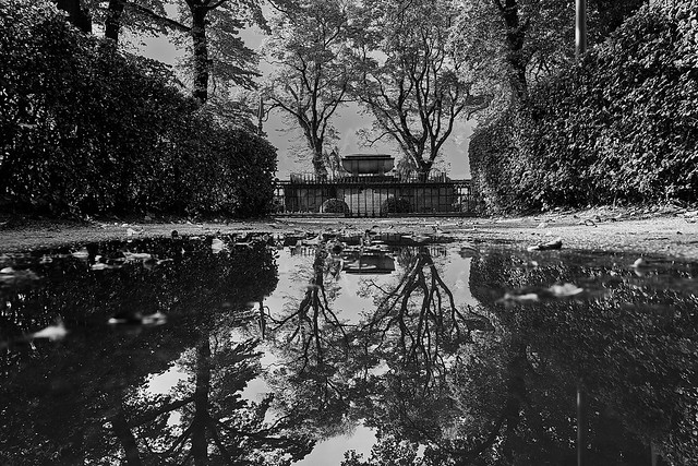 Reflections in water 0193