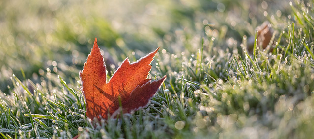 Michigan Autumn Frost