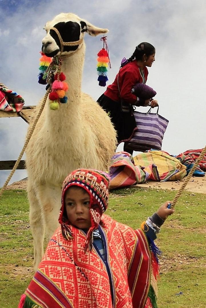 Lama au Pérou