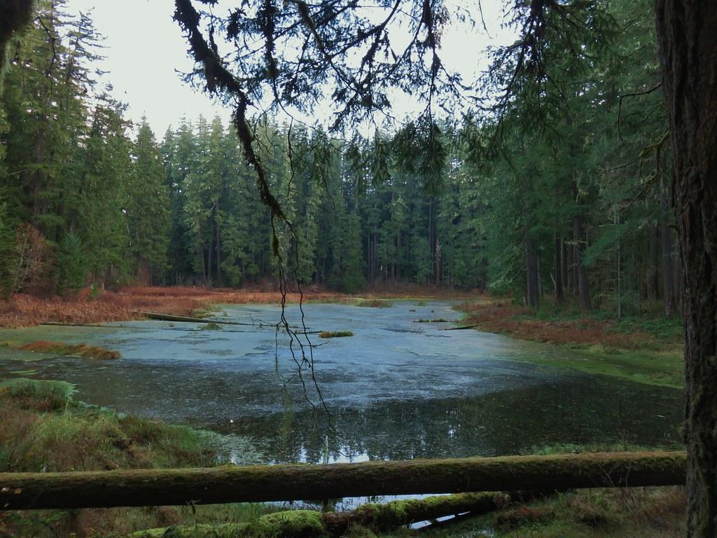 Old beaver pond along the Alder Flat Trail