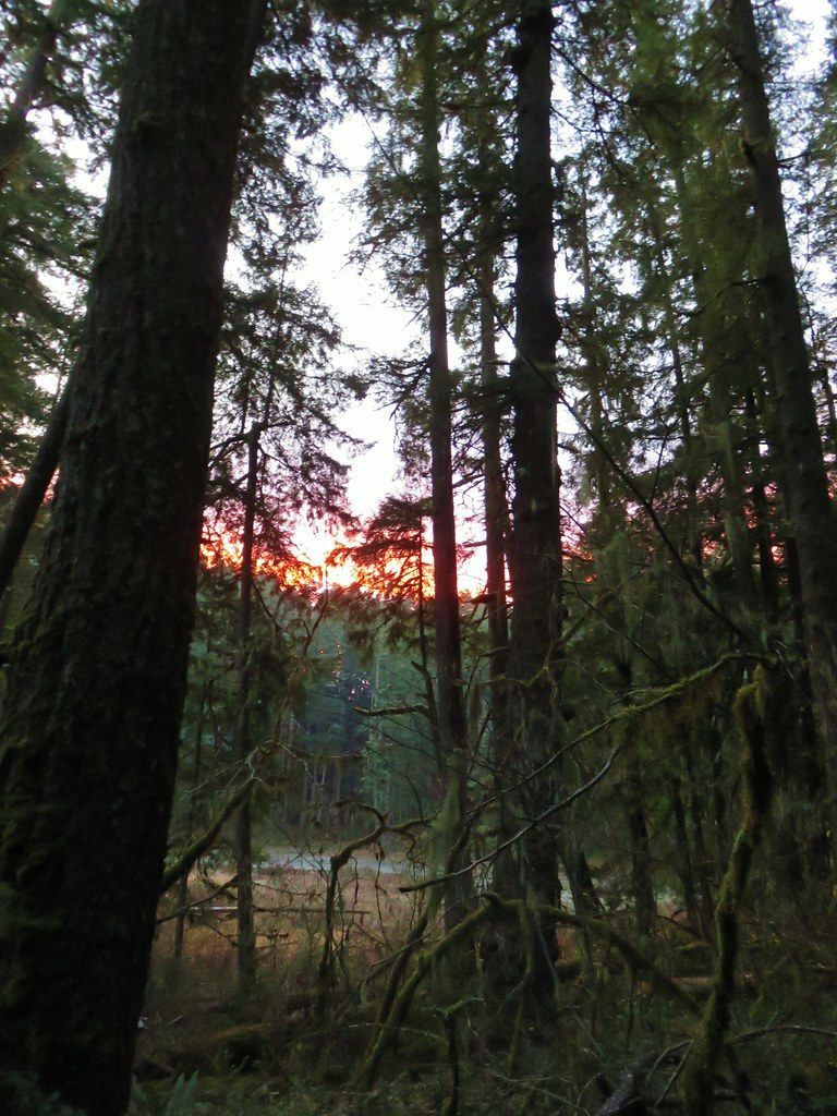 Sunrise from the Alder Flat Trail