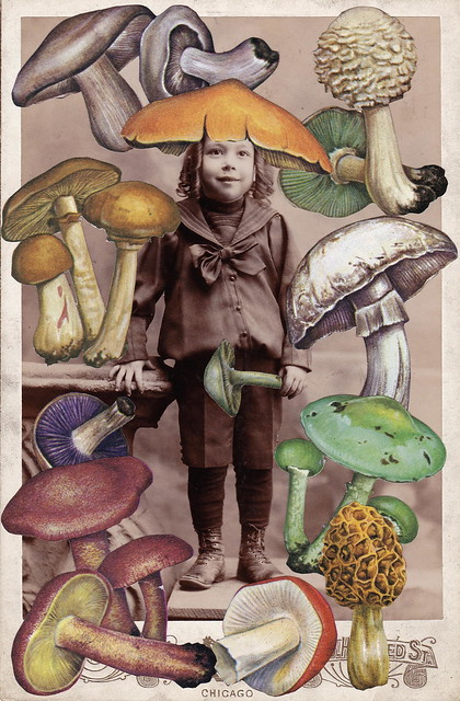 Marvin's Youthful Obsession with Mycology Rivaled That of Beatrix Potter