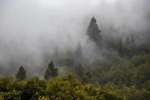 Hiding in the fog 11/9