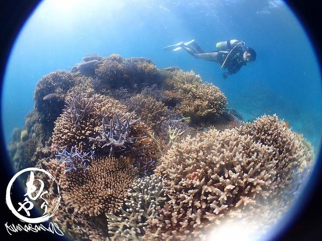 気持ちよさそうにもりもり珊瑚を堪能中のMさん♪
