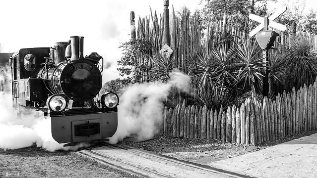 TRAIN - 7684