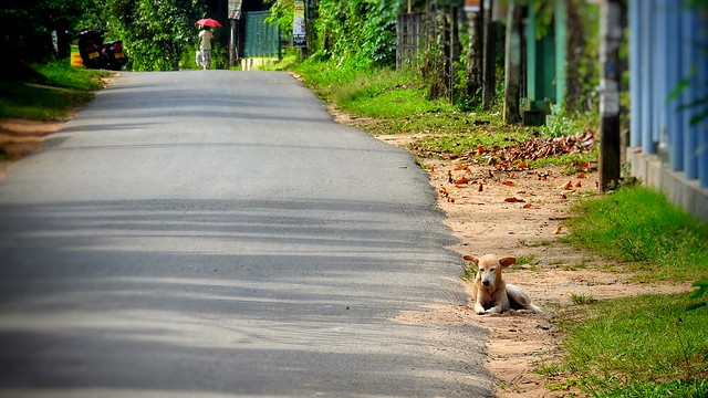 Dog by the Road