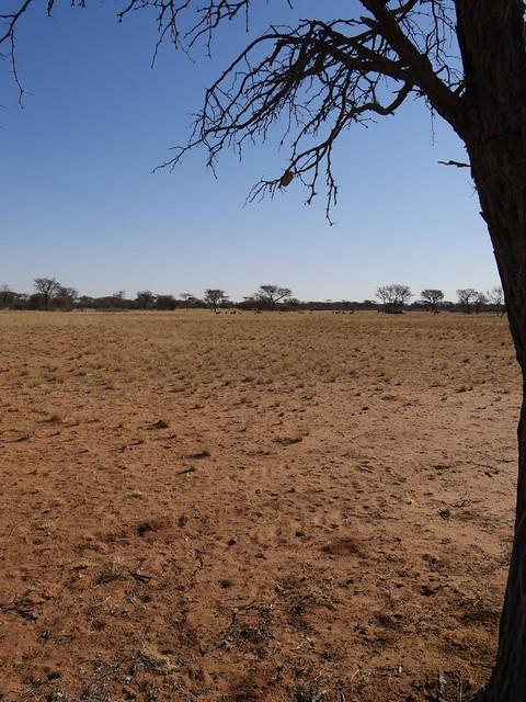 NamibiaFromWindhoekToGobabis020
