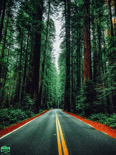 HIGHWAY 254-AVENUE OF THE GIANTS-MIDDLE OF THE ROAD-2019-3024WX4032H-300PPI- © Cody Jacobson-ZEN MOUNTAIN MEDIA all rights reserved