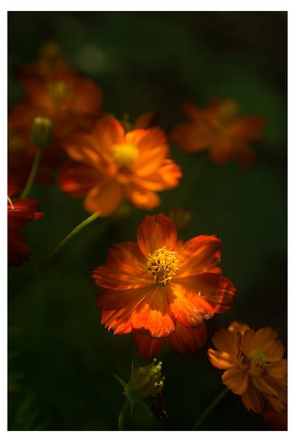 Orange Flowers In The Dark Green - Chanticleer - Wayne PA_Web 1-E_Scaled