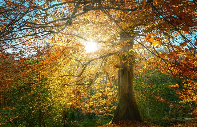 Autumn Collection - 3 - sunrays