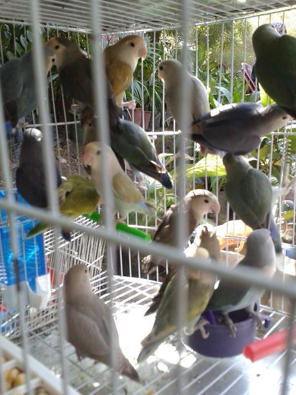 طيور بمعرض الزهور بالخرطوم