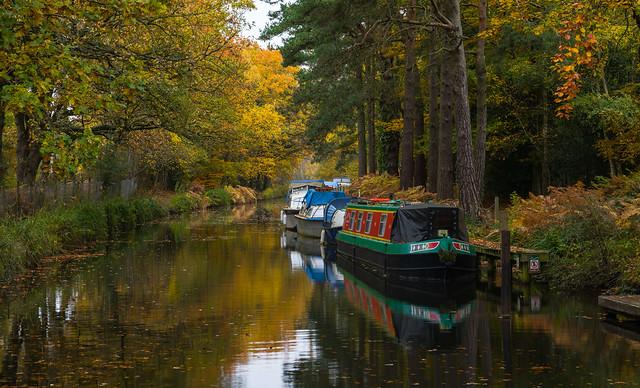 Autumn colours on the Basingtoke Canal