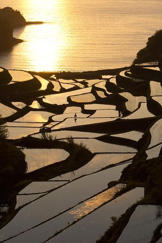sea terrace fields sunset paddy saga kyushu japan sony nex7 sel1670z 九州 佐賀 浜野浦 棚田 1670mm