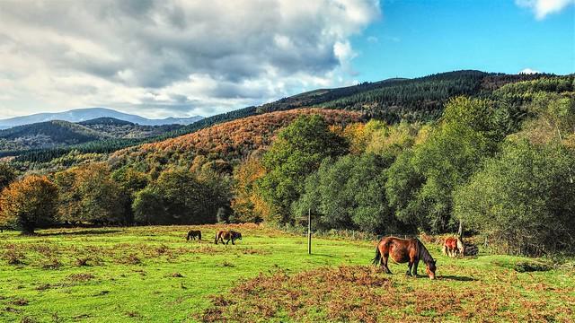 Caballos pastando en las campas de Urkiola
