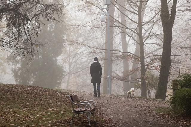 ILUSTRACE, ILUSTRAČNÍ, počasí, podzim, mlha
