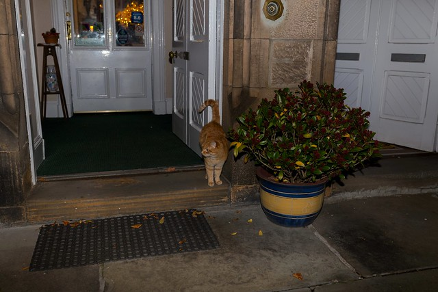 IMG_6350 Cat, Inverness